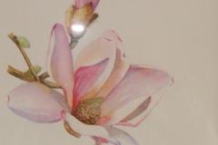 19 - Magnolia